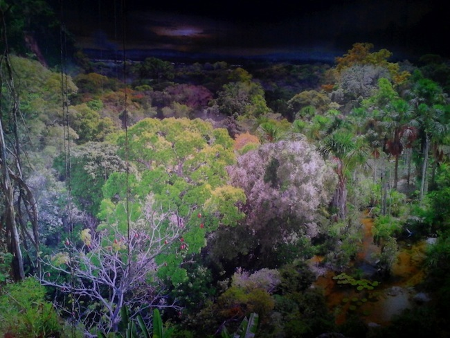 Au Panorama XXL à Rouen: traverser l'Amazonie
