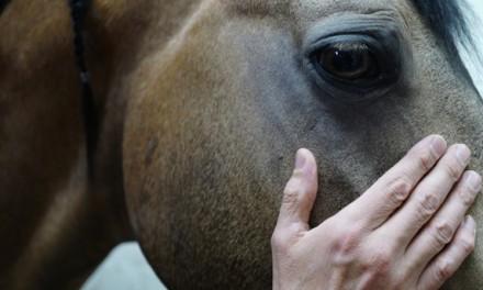 Alain Cavalier à l'Omnia: l'homme qui filmait les chevaux