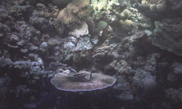 Rouen : La Grande Barrière de corail au Panorama XXL