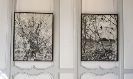 « Family Trees » au jardin des plantes à Rouen